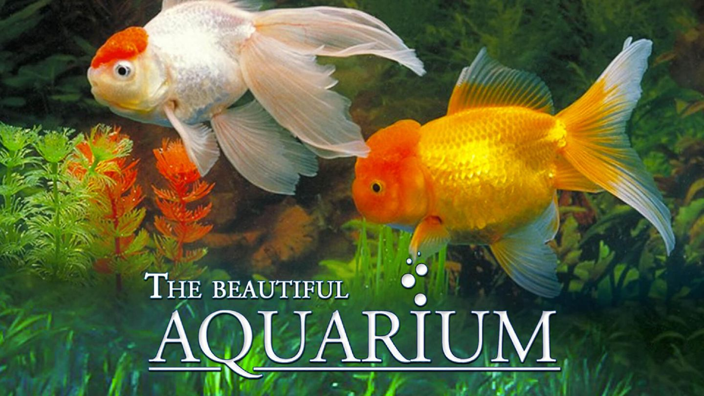 The Beautiful Aquarium: Relaxation with Music & Nature